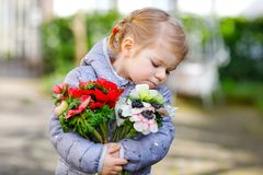 Little toddler lovely girl with red and white ranunculus flowers in spring garden. Happy cute baby holding fresh. Colorful bouquet as gift for mother`s day for royalty free stock images