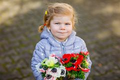 Little toddler lovely girl with red and white ranunculus flowers in spring garden. Happy cute baby holding fresh. Colorful bouquet as gift for mother`s day for royalty free stock photo