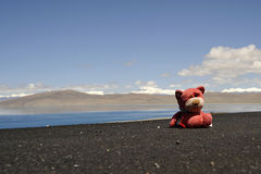 Little toy bear on the road. Lake Manasarovar is the world's highest average elevation freshwater lake (4,556 meters), in Tibet Stock Image