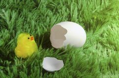 Toy chicken hatching from an egg. Little toy chicken in the eggshell on a green background like a grass Royalty Free Stock Photo