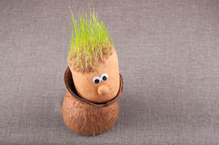 Little toy man with weat sprouts as hair sit in coconut shell Royalty Free Stock Photo