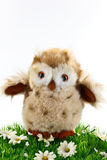 Little toy owl Stock Photos