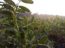 Little_tree стоковое изображение