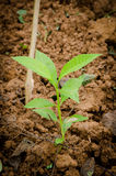 A little tree. Is planted Stock Photography