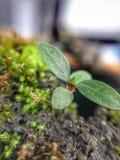 little tree royaltyfri fotografi