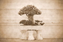 Little tree or bonsai. In the pot royalty free stock images