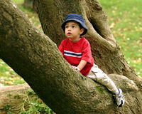 Little Tree Climber Stock Image