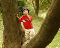 Little Tree Climber Royalty Free Stock Photo