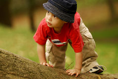 Little Tree Climber Stock Photo