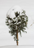 Little tree. Covered with snow in AIC Park royalty free stock images