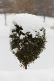 Little tree. Covered with snow in AIC Park stock images