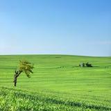 Little tree and farm house under blue sky. In Czech Republic Stock Photos