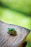 Little tree frog Stock Photo
