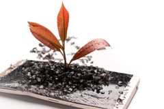 Little tree growing on the broken smart phone, environment, knowledge, innovation and technology concept with copy space stock photos