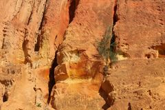 Little tree growing on sand cliffs of orange colored sand Stock Images