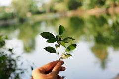 Little tree on hand. In garden stock image