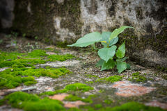 Little tree and moss green ferns on brick wall Stock Photos