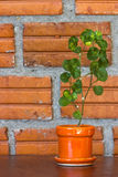 Little tree on orange pot Royalty Free Stock Images