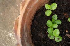 Little tree pot Stock Photo