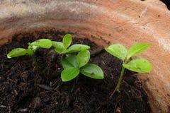 Little tree pot Royalty Free Stock Photos