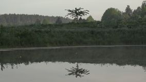 Little tree reflection in the water on an early calm morning. Mysterious atmosphere in nature landscape.  stock footage