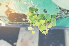 Little tree on rust plate. Royalty Free Stock Photo