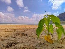 Little tree on the sand beach. Little tree sand beach sky ocean beach stock photo