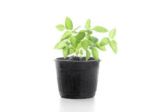 Little tree and Soil on white background Royalty Free Stock Photo