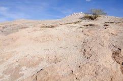 Little Tree on Top of a Hill in Atacama Desert Royalty Free Stock Photos