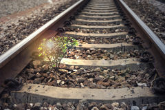 A little tree vegetate among the railway, flare effect added, light effect added ,filtered image, background,selective focus.  royalty free stock photos