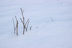 Little tree on white snow. Winter background. Royalty Free Stock Images