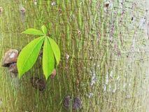 little tree stock photography