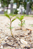 Little trees grow Stock Images