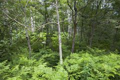 Little Trees among Plants Stock Photos
