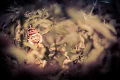 A little troll, playing in my garden. Stock Image