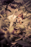 A little troll, playing in my garden. Royalty Free Stock Photos