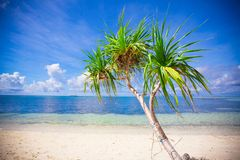 Little tropical coconut palm tree in desert island Royalty Free Stock Photos