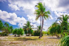 Little tropical coconut palm tree in desert island Stock Images