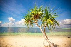 Little tropical coconut palm tree in desert island Royalty Free Stock Image