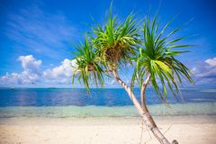 Little tropical coconut palm tree in desert island Royalty Free Stock Images