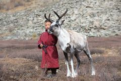 Little tsaatan boy playing with his family`s reindeer. stock image