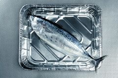 Little tunny, tuna, alby, albacore, silver color. Royalty Free Stock Images