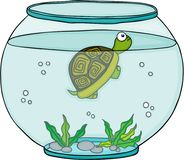 Little turtle in globe aquarium Stock Photo