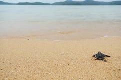 Little turtle go oceans. Little turtle on beach go oceans Royalty Free Stock Photo