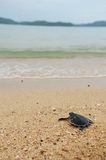 Little turtle go oceans Stock Photos