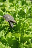 Little turtle on green leaves stock photo