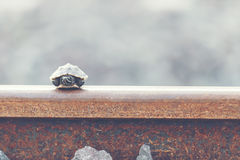 Little turtle. Little turtle live in railway, wildlife in the city concept Royalty Free Stock Photos