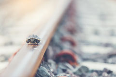 Little turtle. Little turtle live in railway, wildlife in the city concept Stock Photos