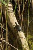 Little turtle Stock Photos