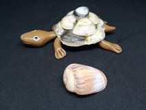 A nice little turtle accompanied by a shell royalty free stock photography